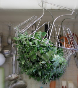 draining greens - www.inhabitedkitchen.com