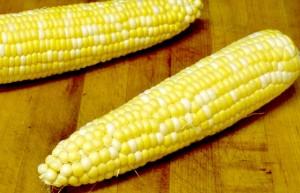 Sweet fresh corn CSA www.inhabitedkitchen.com