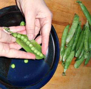 Fresh peas! CSA - www.inhabitedkitchen.com