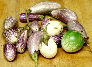 Assorted Mini Eggplant - www.inhabitedkitchen.com